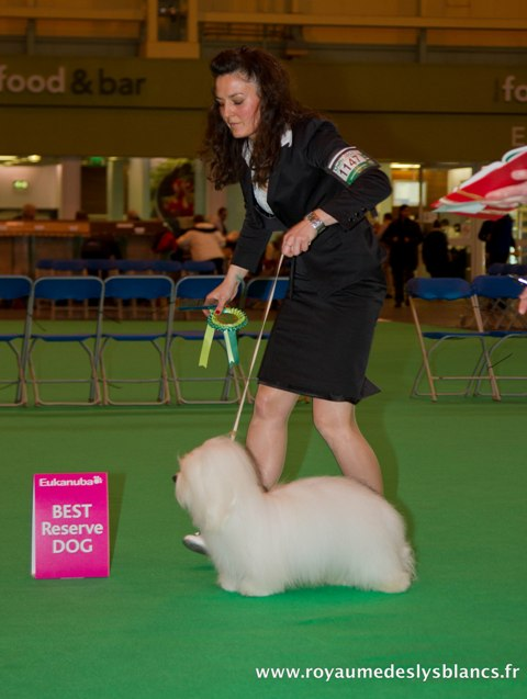 Diwal - Reserve Best Male at Crufts 2012