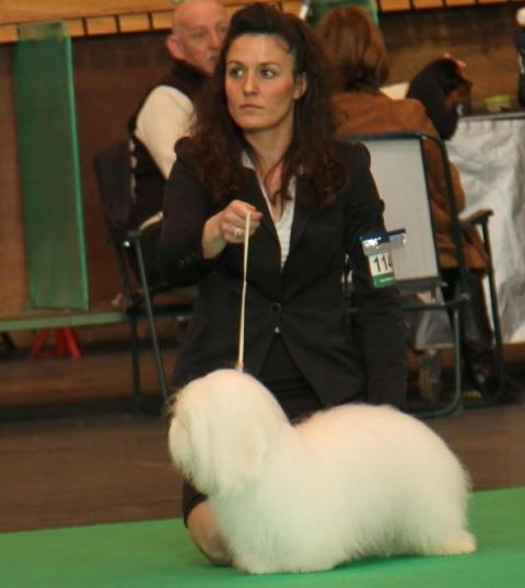 Diwal at Crufts 2012 with Maud (TDS handling)