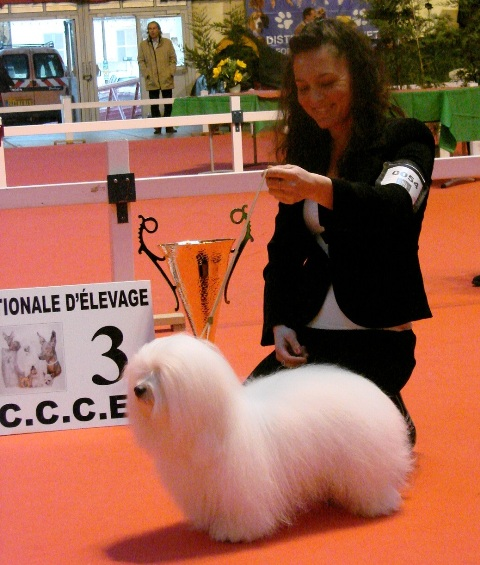 Diwal - CAC - BOB - BIS3 at the National Specialty Exotic Dogs 2012